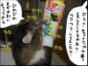 20080918_new